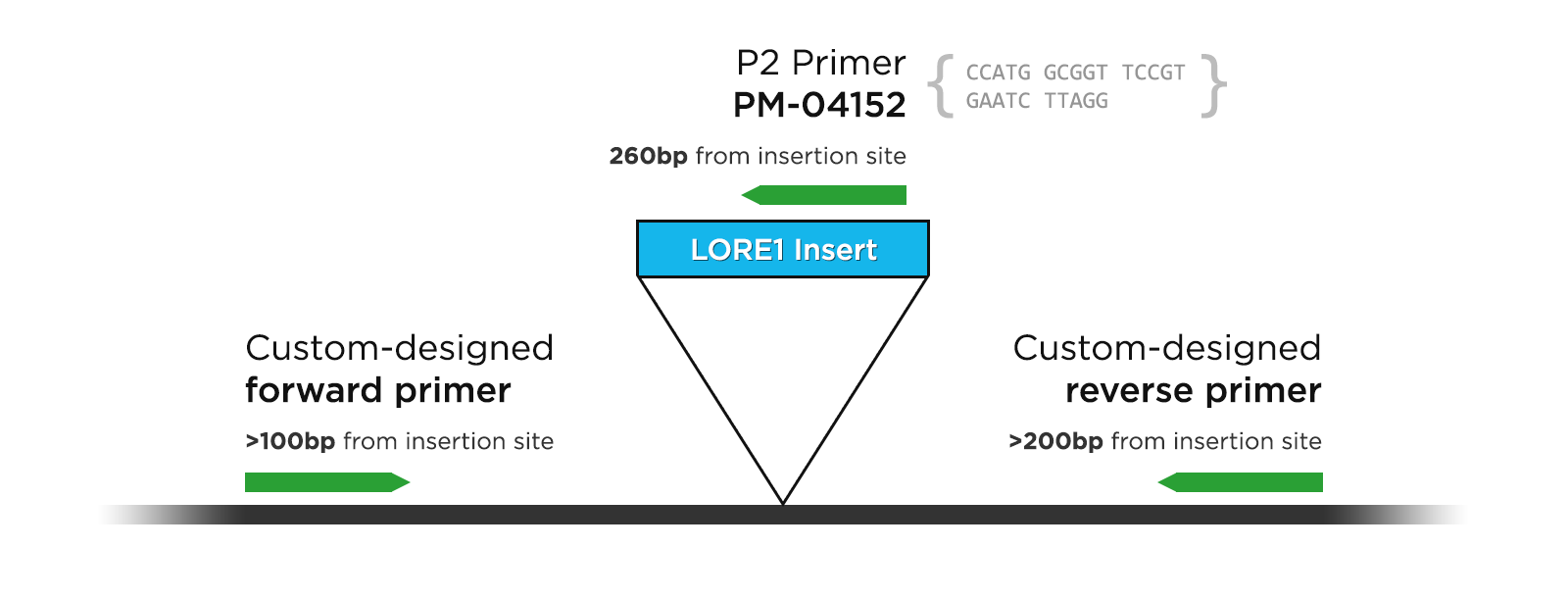 Designing genotyping primers for LORE1 lines